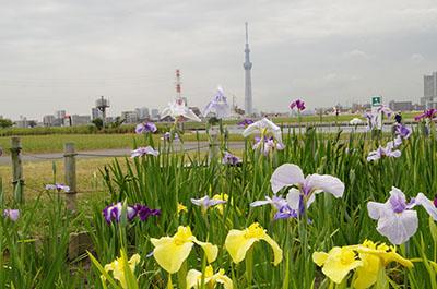 堀切水辺公園02